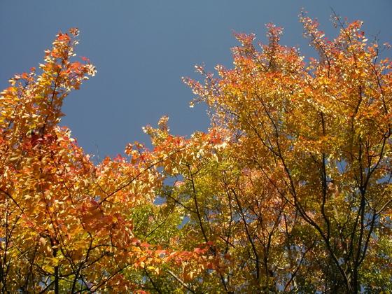 botanical-garden-fall-4.jpg